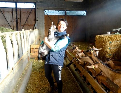 Le «Chevrou»: L'amour des chèvres dans l'Emblavez…