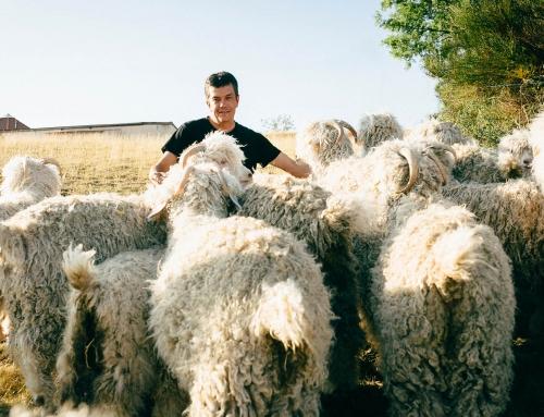 De la laine Mohair produite en Velay !