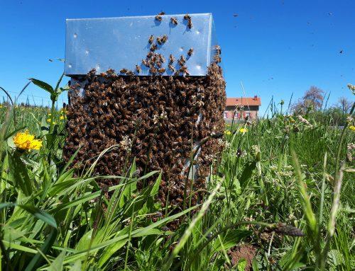 Vincent Gobet vit sa passion d'apiculteur à Sembadel